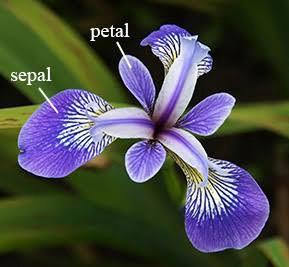 Project - Iris Species Classification