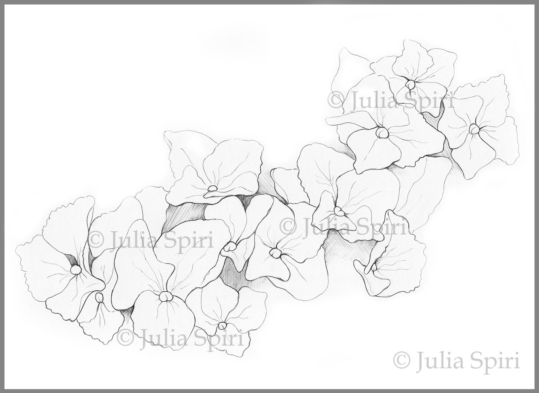 Black & White Drawing