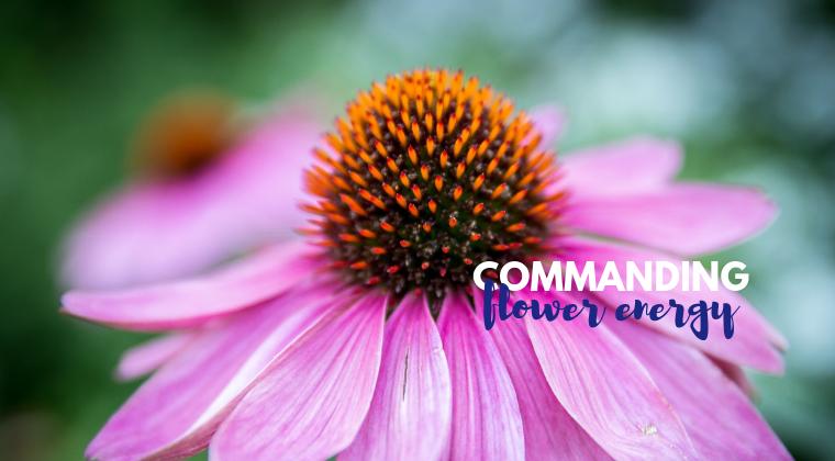 Commanding Flower Energy - PDF Download