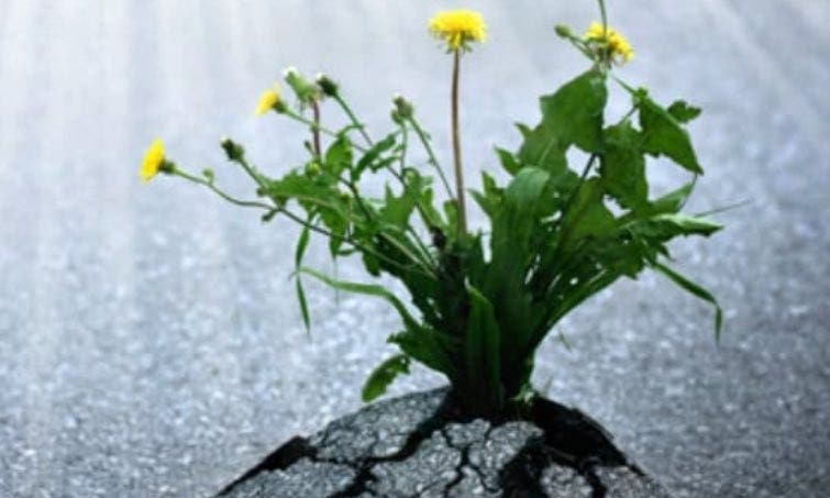 Growing in Grace in Difficult Days