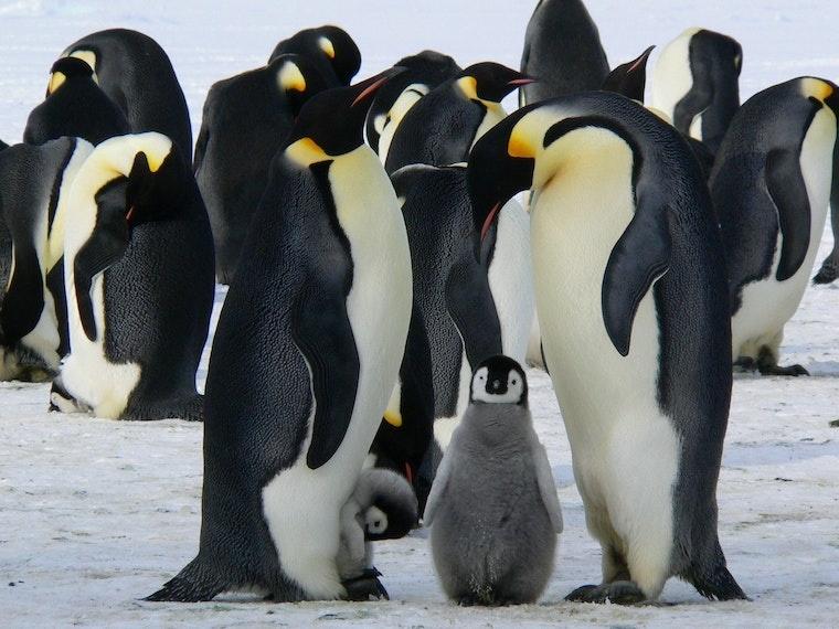 3. Linux - rendszergazdai feladatok