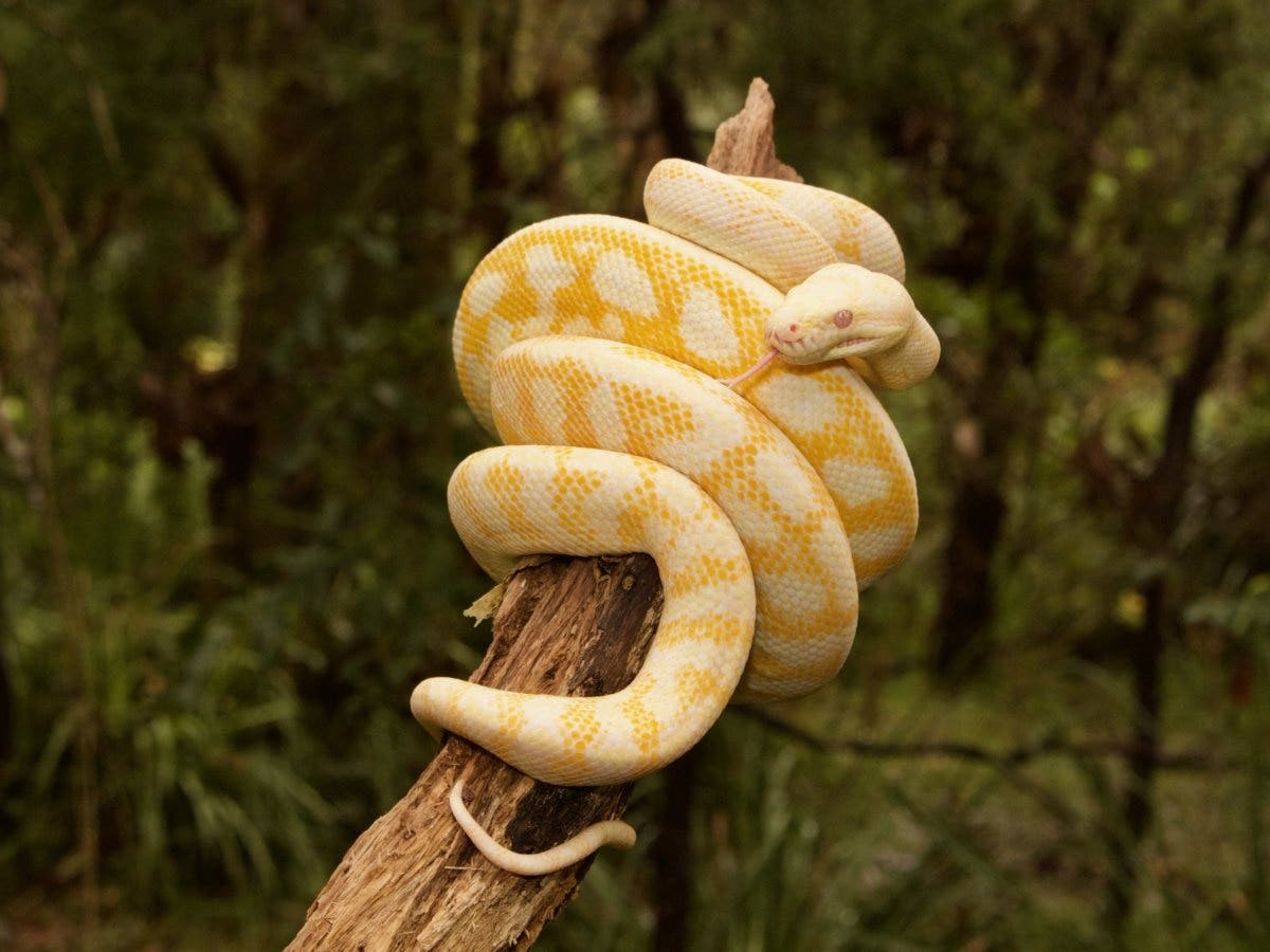 Python tanulási útvonal