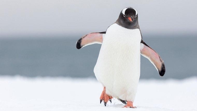 2. Linux - az első lépések
