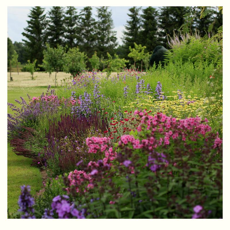 Efektsed taimekooslused