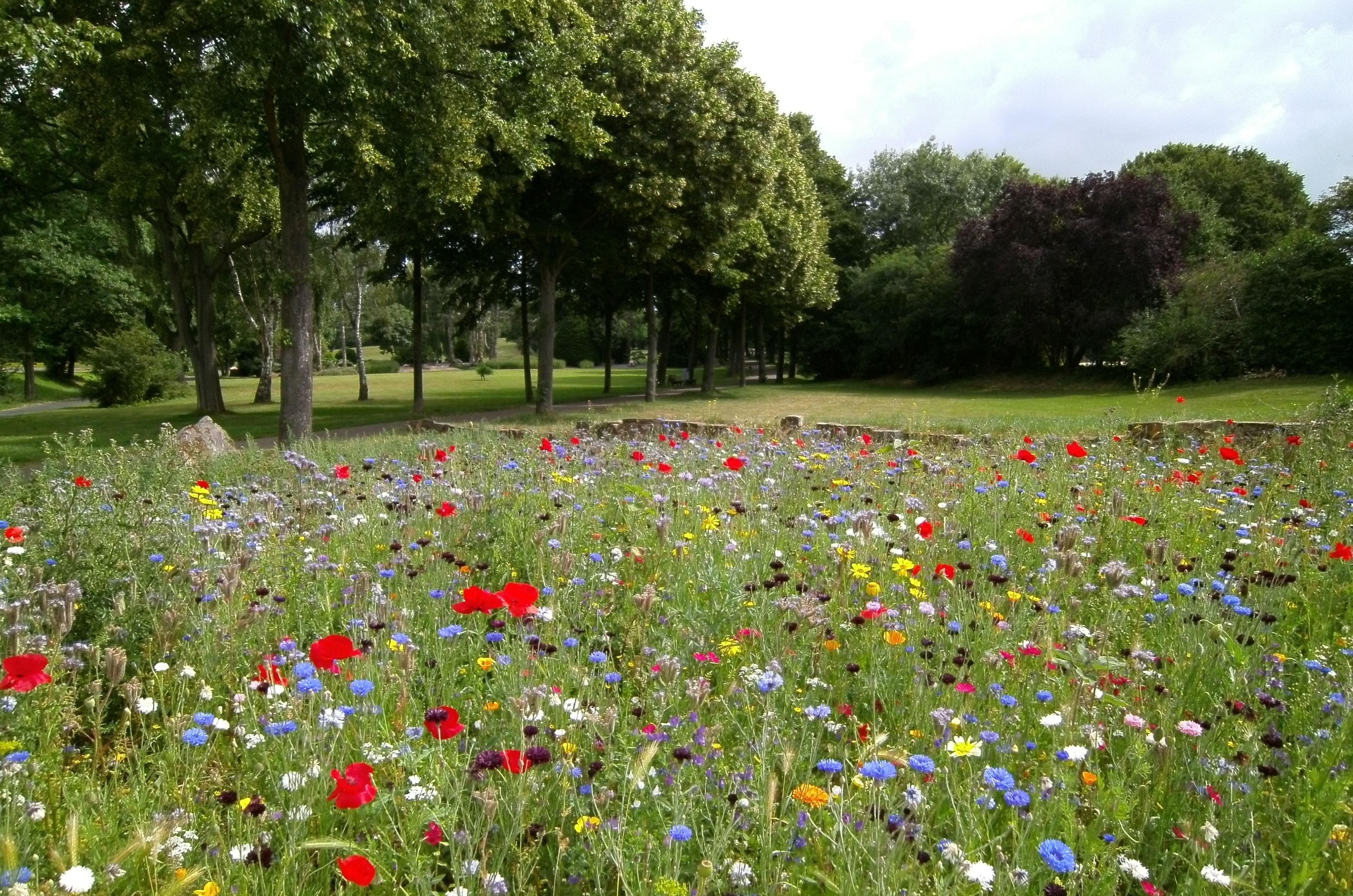 Lilleaas Sinu aias