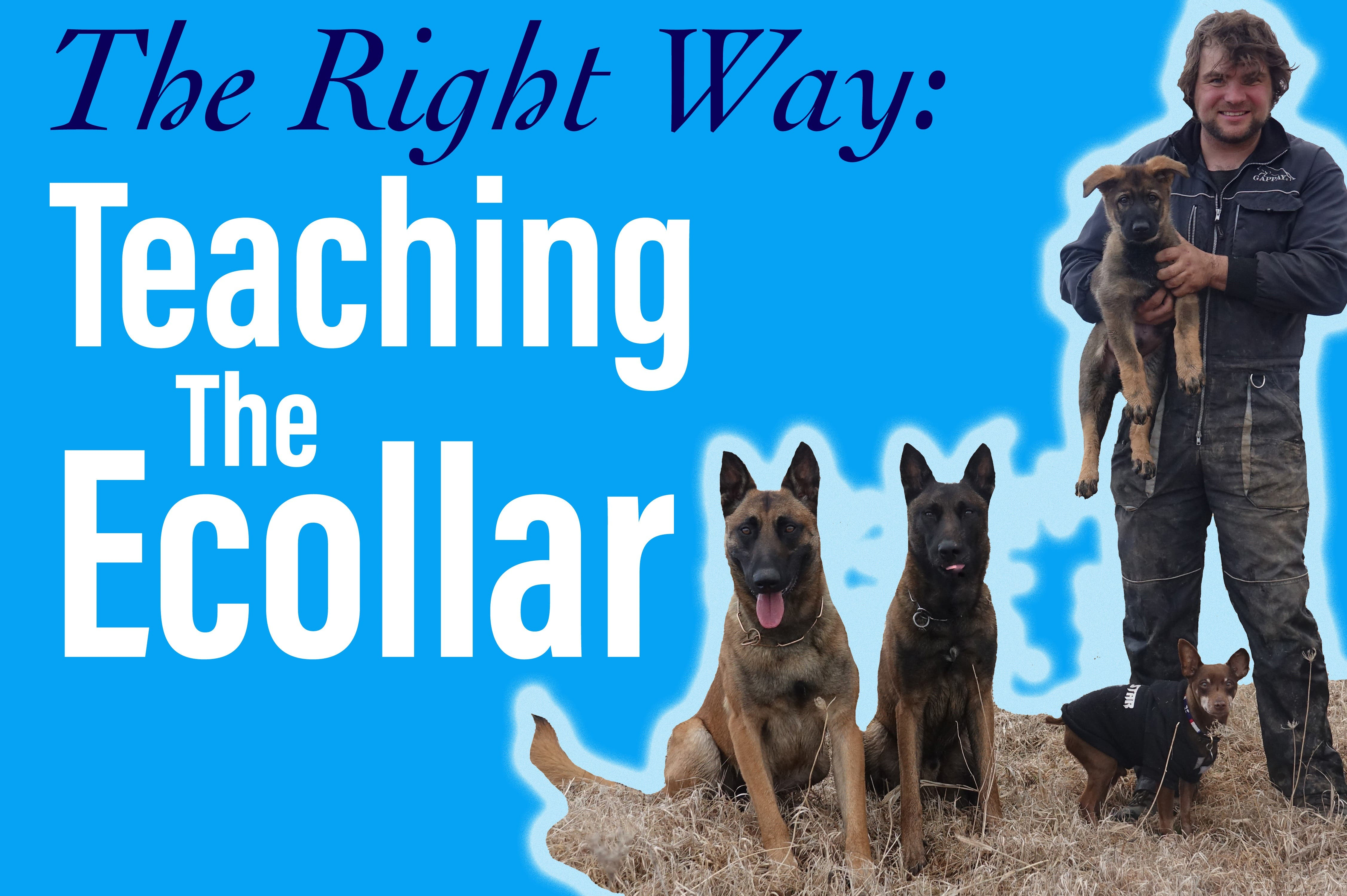 The Right Way: Teaching the Ecollar