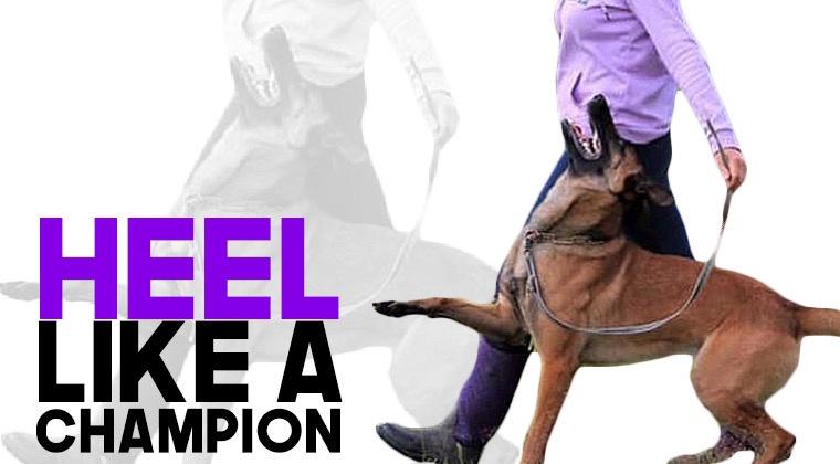 Heel Like A Champ!
