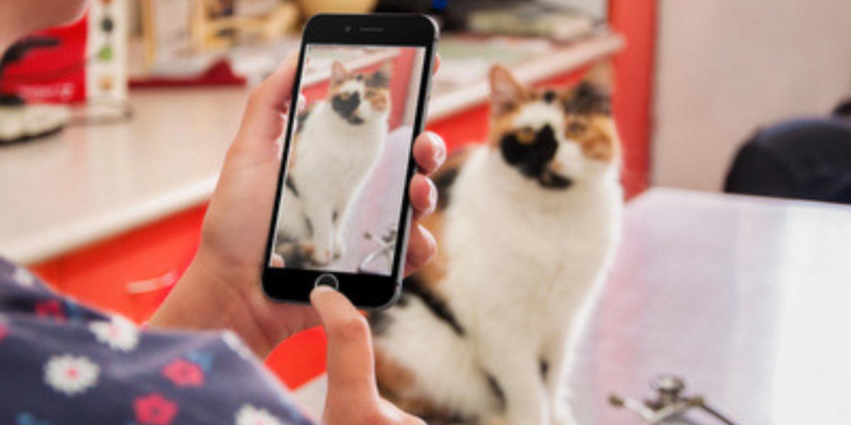 Veterinary Social Media 101 Masterclass & Community