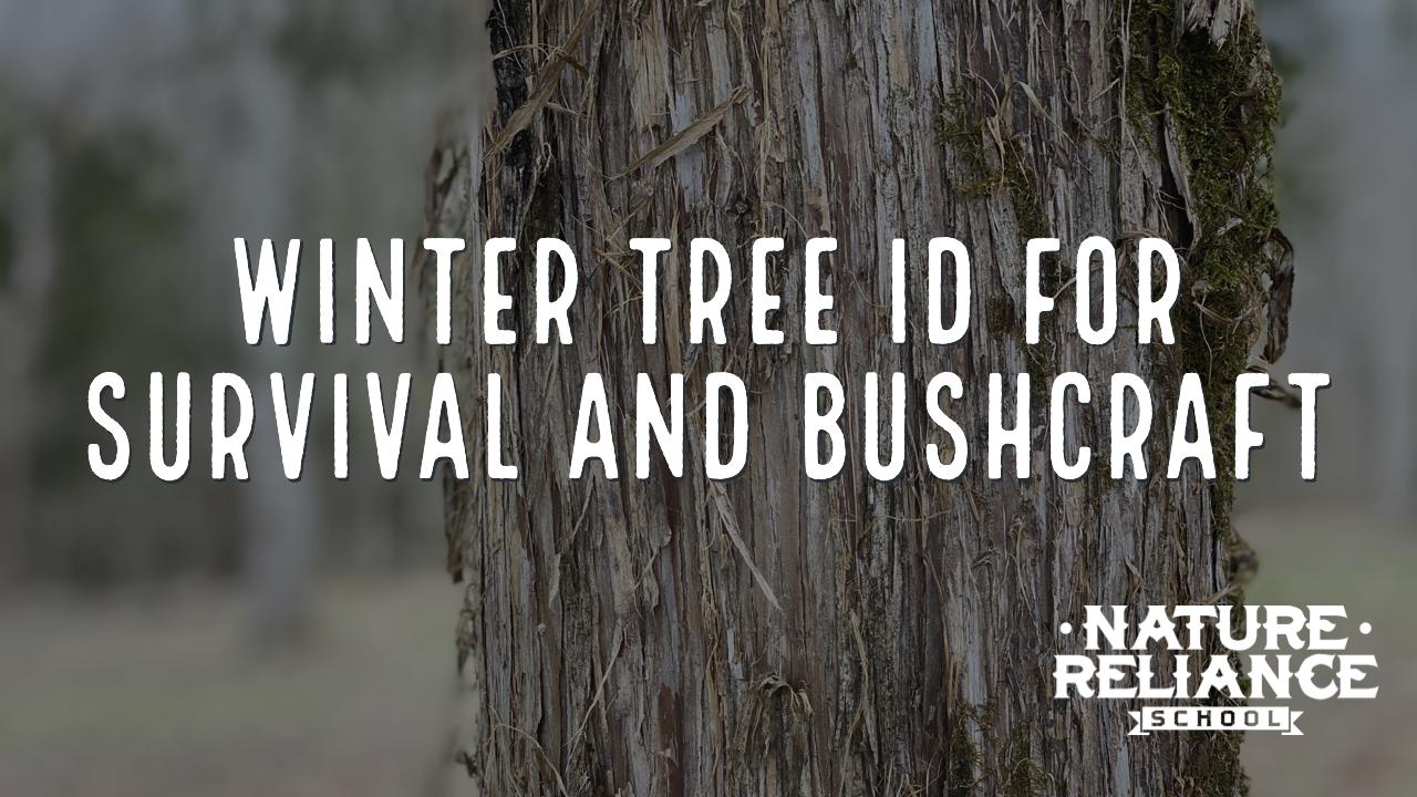 Winter Tree Identification for Survival & Bushcraft