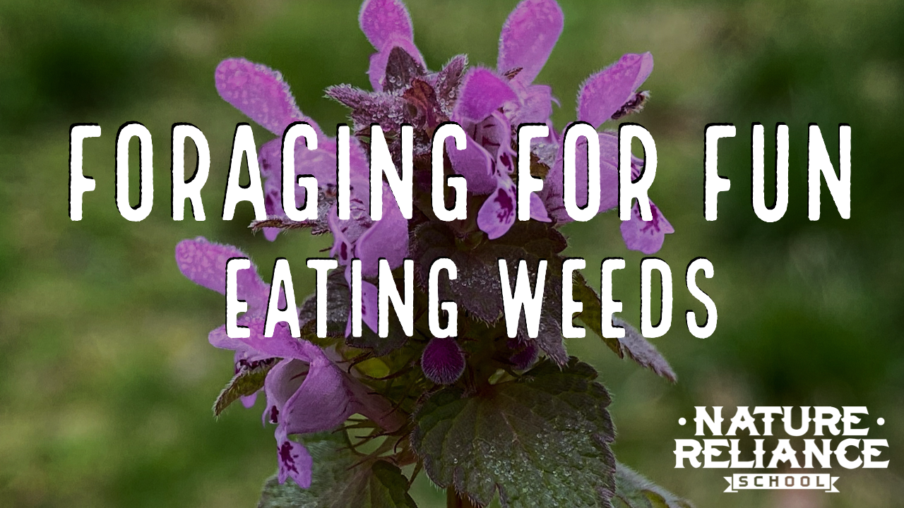 Foraging for Fun:  Eating Weeds