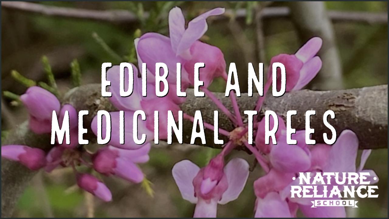 Edible & Medicinal Trees: Various Seasons