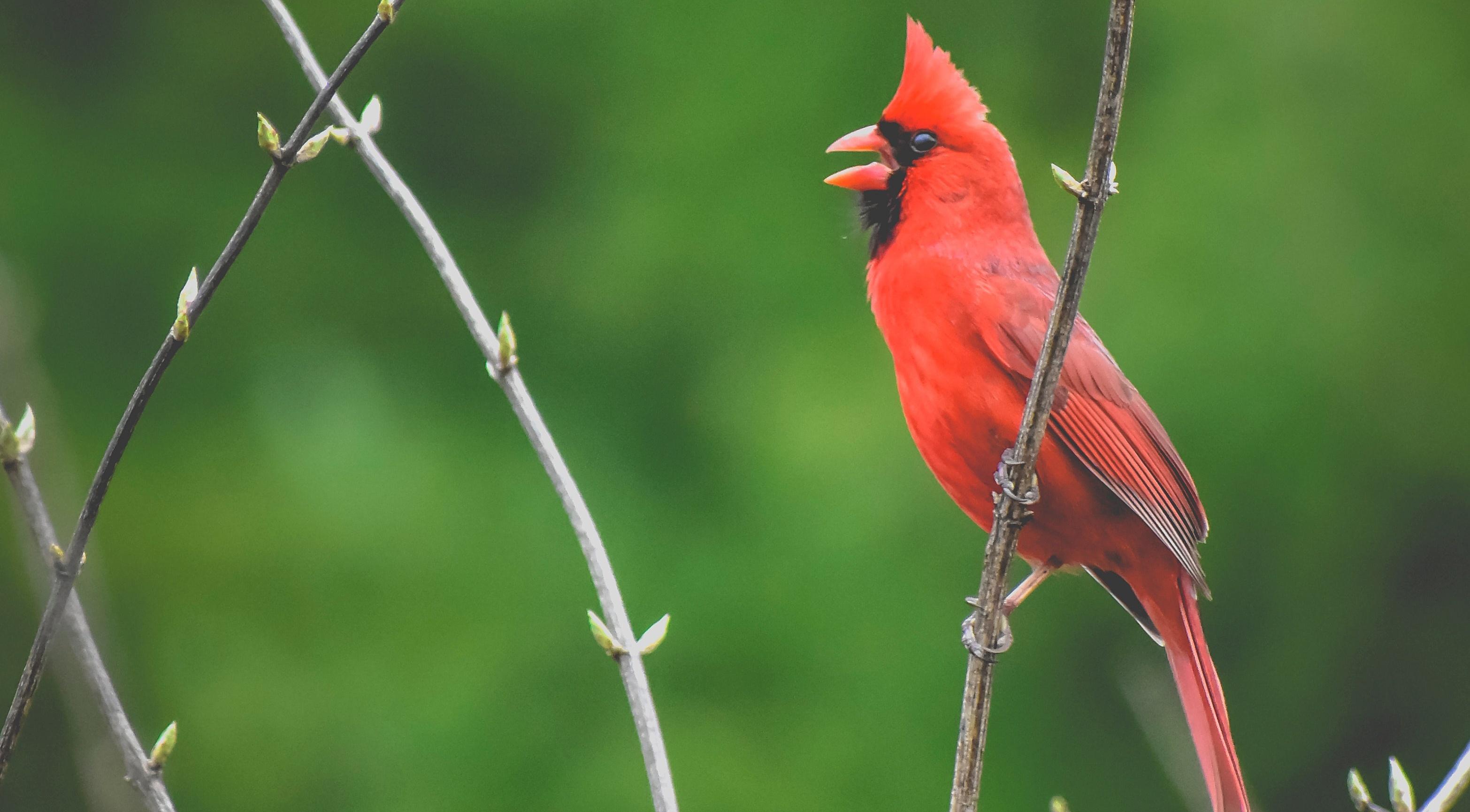 Learn to Identify Birds: Start Birdwatching Today!
