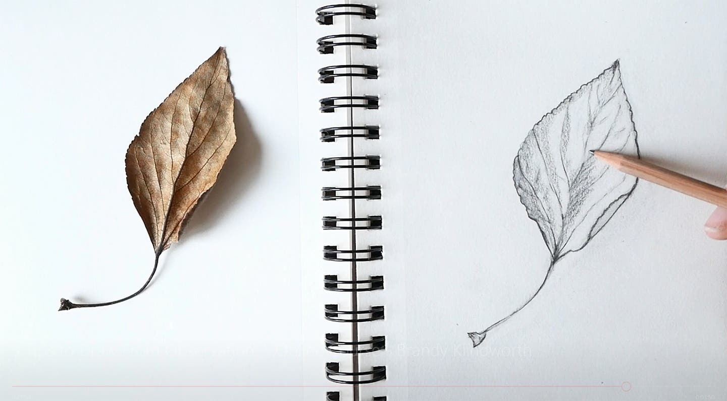 3 Tips to Draw From Observation