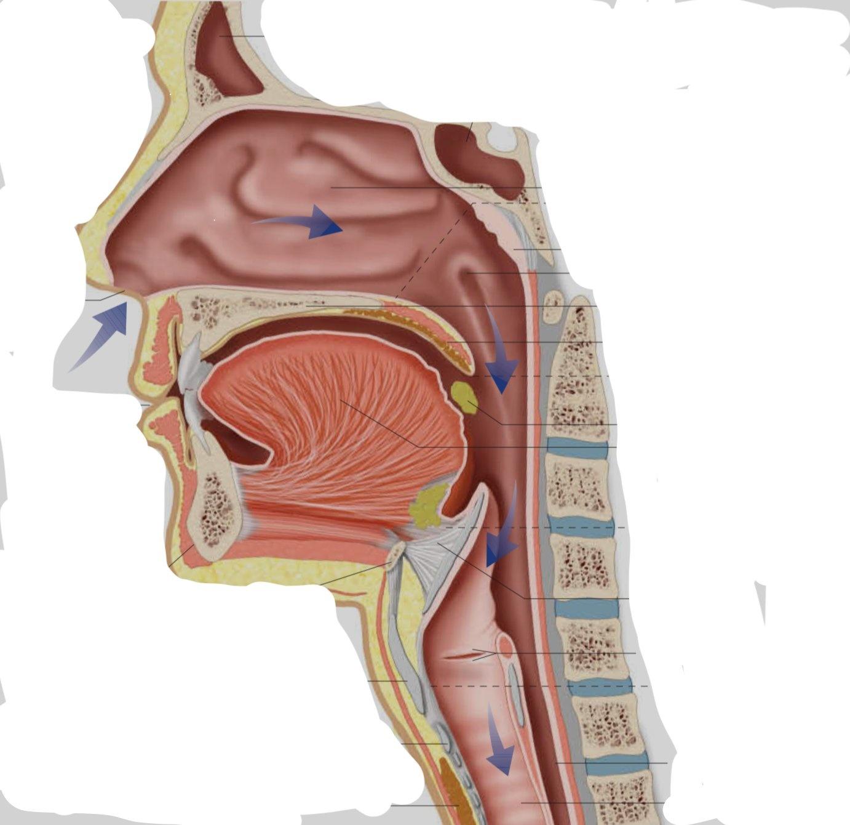 OSA & Oral / Nasal Airway Anatomy (CLOUD) By: Dr. John Viviano - Updated September 30, 2019