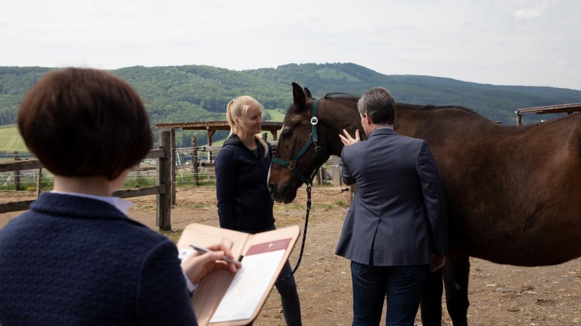 Pferderechts-Angebot