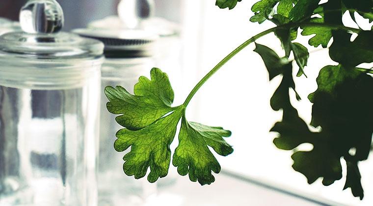 Cuisiner avec les plantes et les huiles essentielles | cours en ligne
