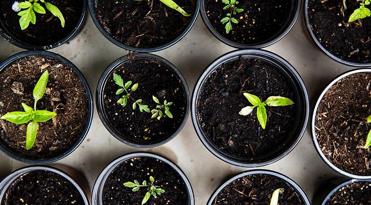 Culture des plantes médicinales et des légumes | cours en ligne