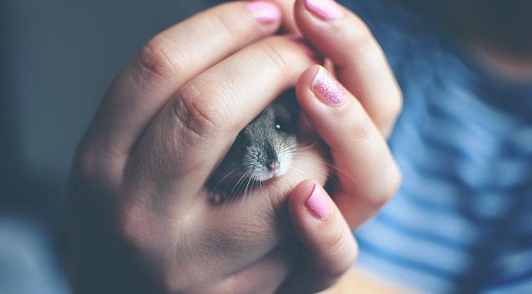 Herboristerie pour petits animaux de compagnie et animaux de ferme | cours en ligne