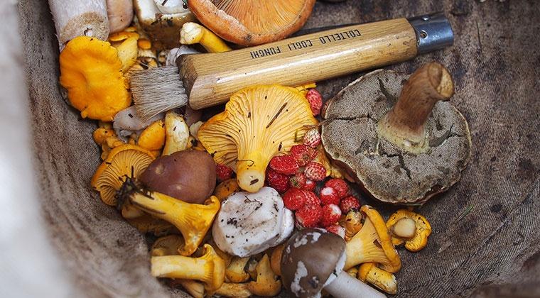 Introduction aux champignons médicinaux | atelier en ligne
