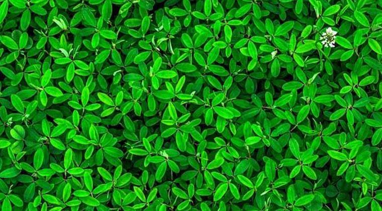Interactions plantes et médicaments | cours en ligne