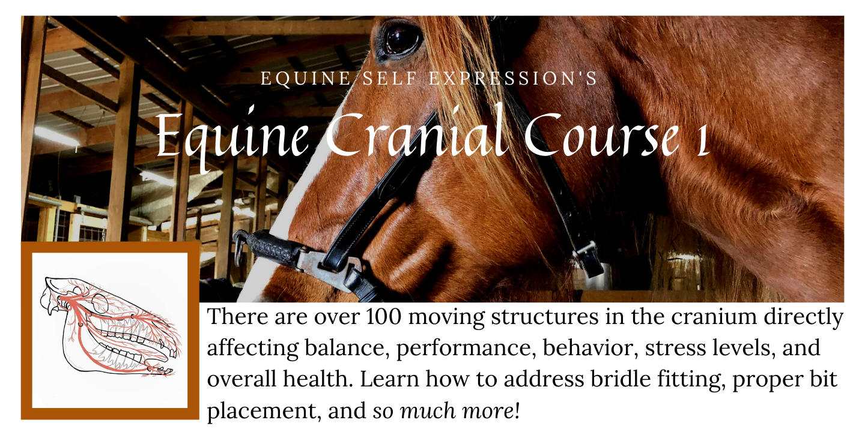 Equine Cranial Course 1
