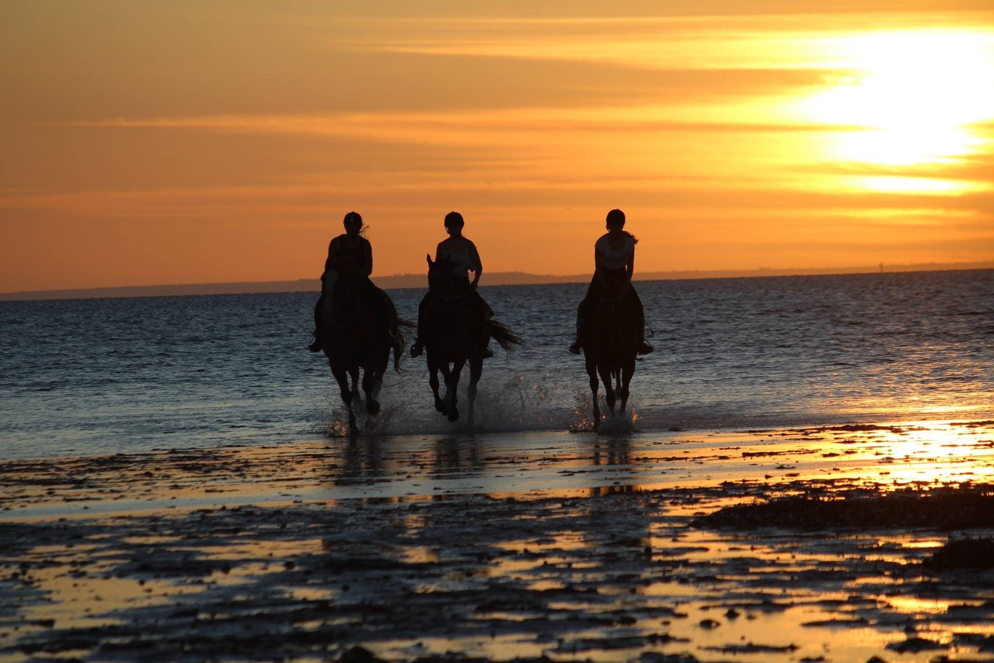 HORSE RIDERS: Discover your Assertiveness in 12 weeks: Find your voice and change you AND your horse's life