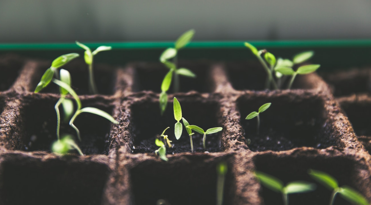 Planted - A New Discipleship Course