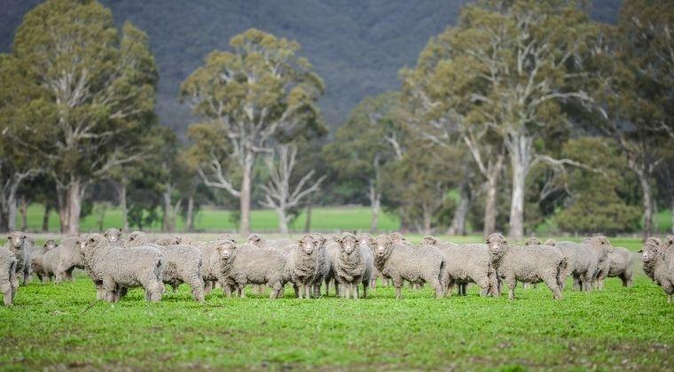 Register for Farming & Grazing for Profit