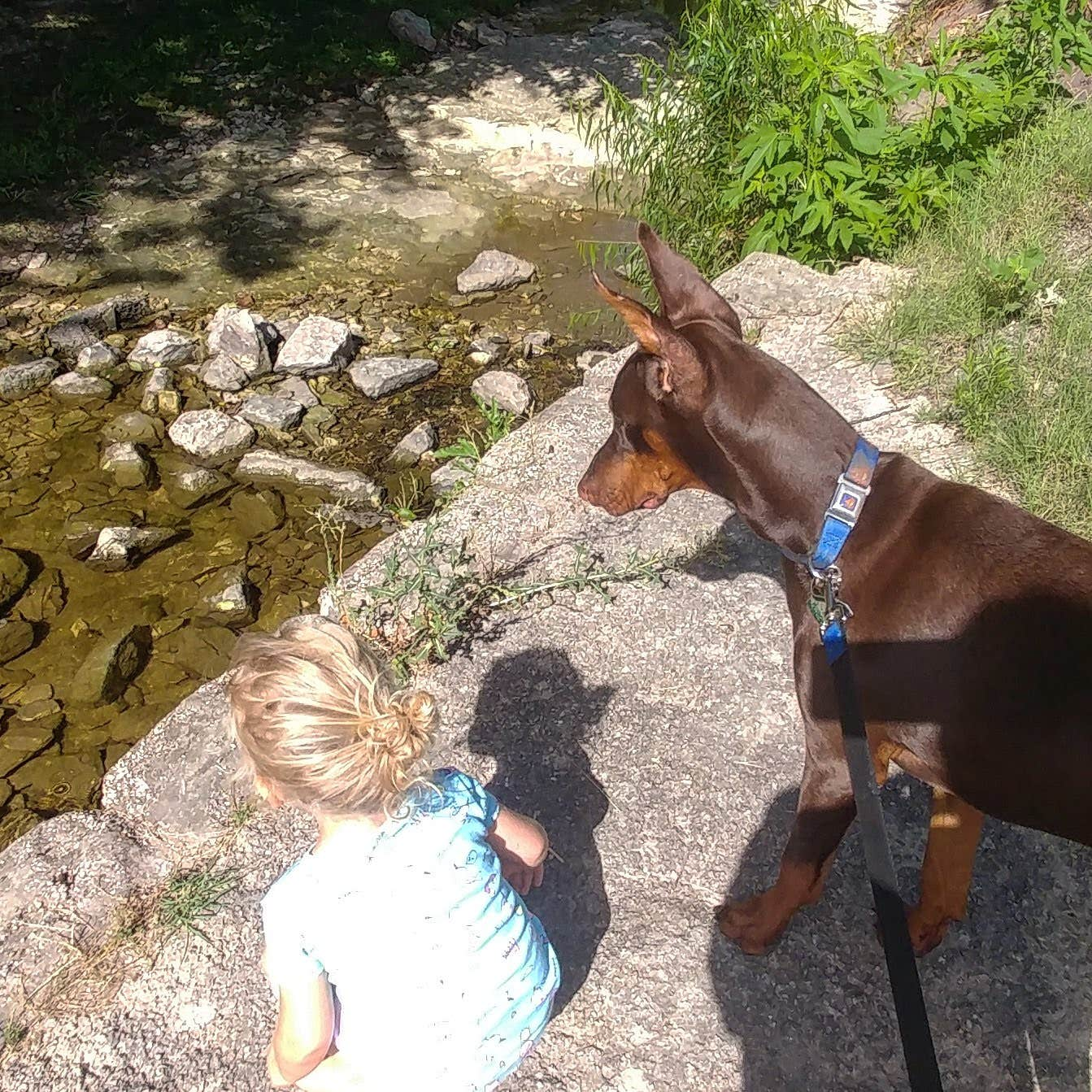 A child and well-trained dog look over the water together.