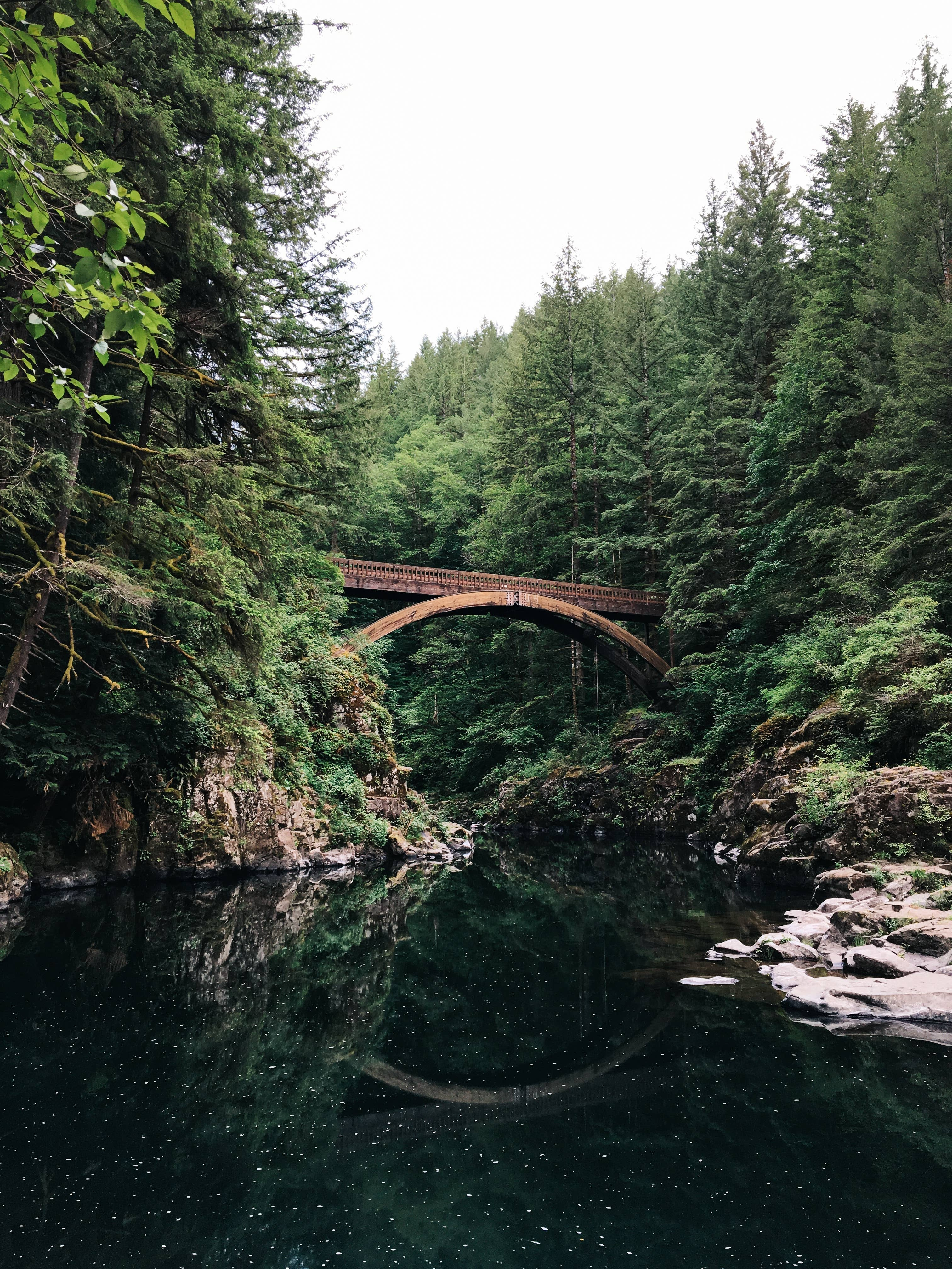 bridge reflected in water surrounded by pine trees