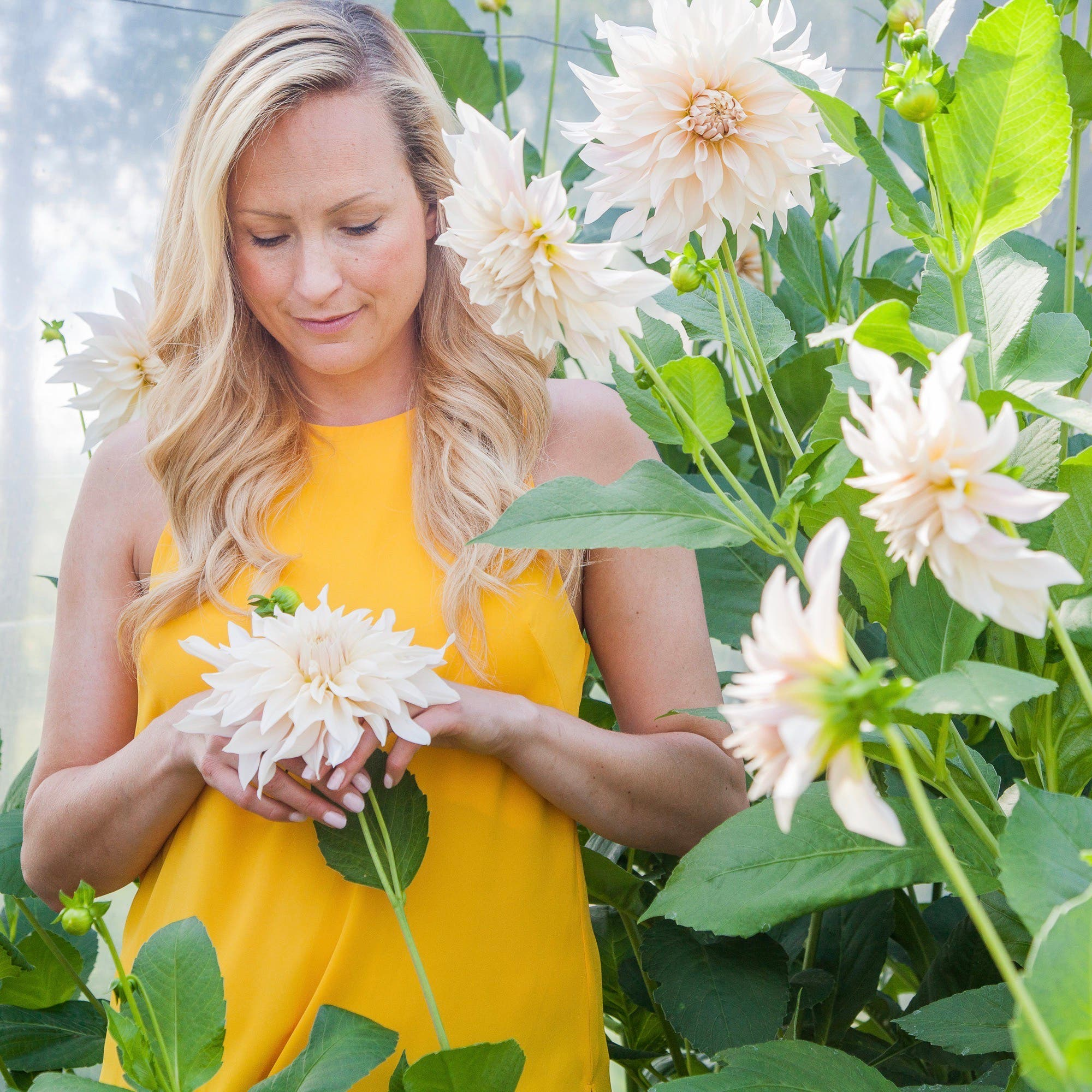 Garden designer Leonie Cornelius with her dinner plate dahlias in a polytunnell wearing a yellow top
