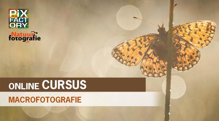 online cursus macrofotografie