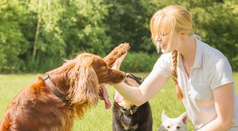 Pet Professional Courses