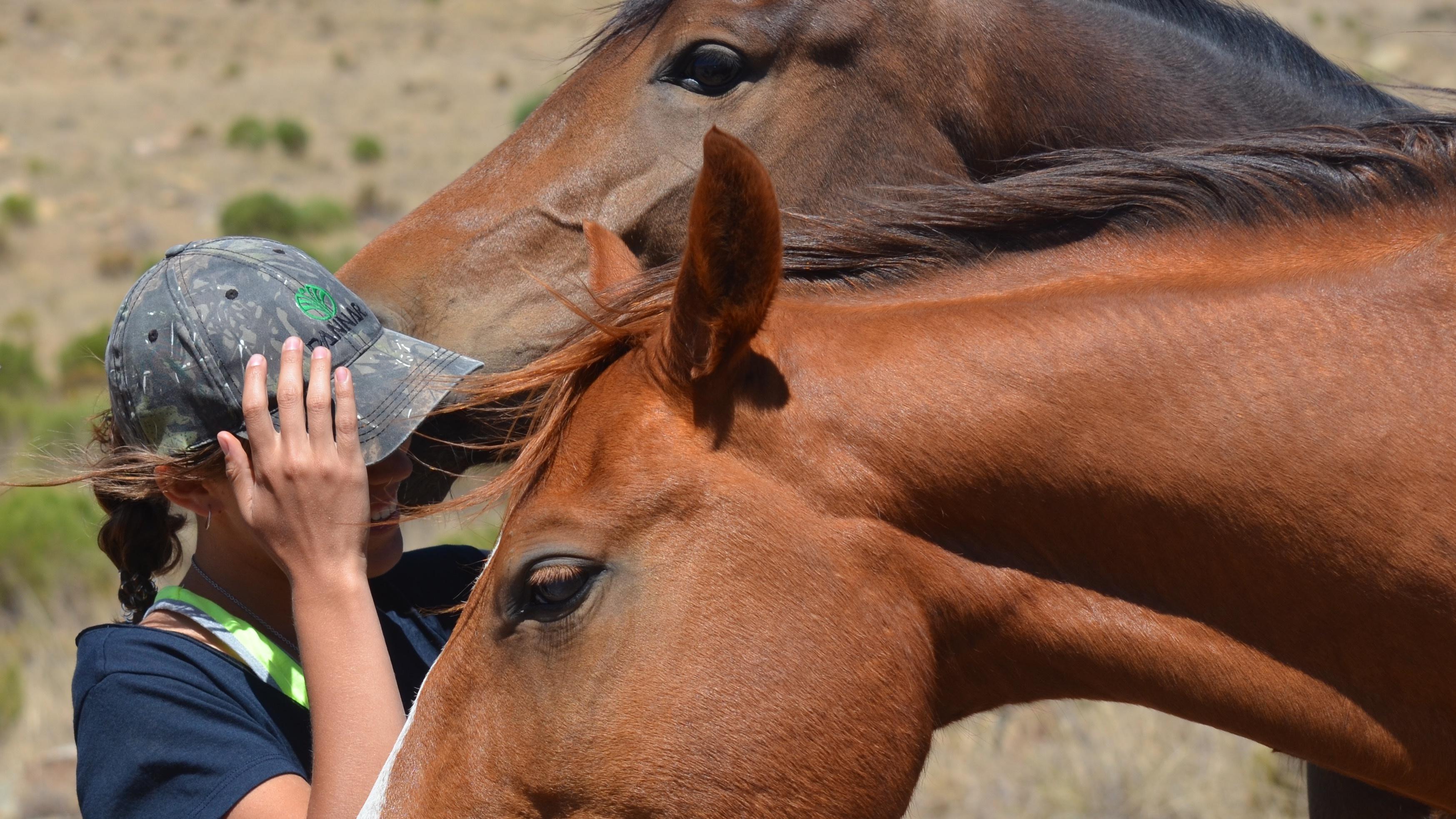 Recorded Horsemanship Classes