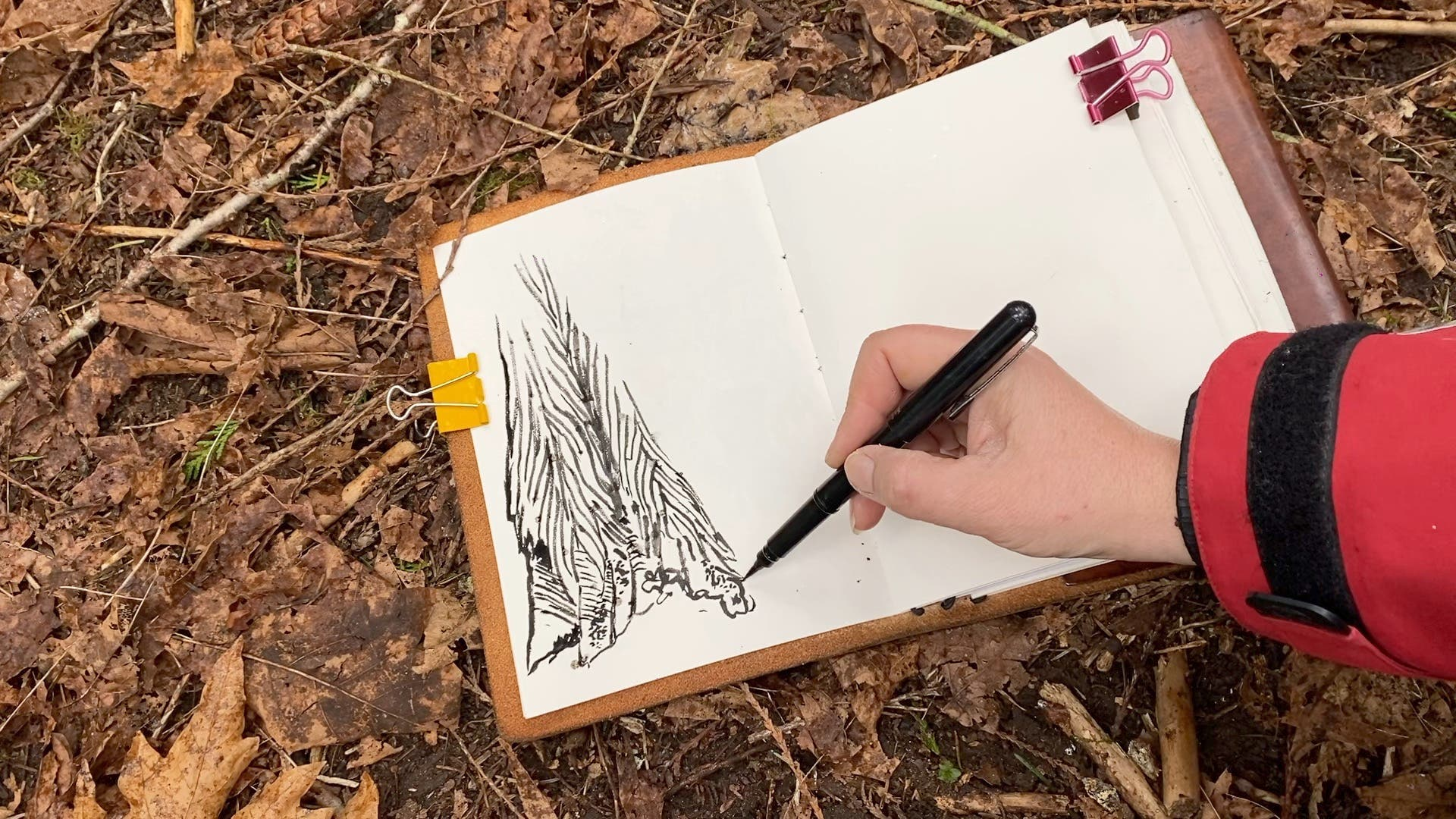 Drawing a red cedar with a brush pen