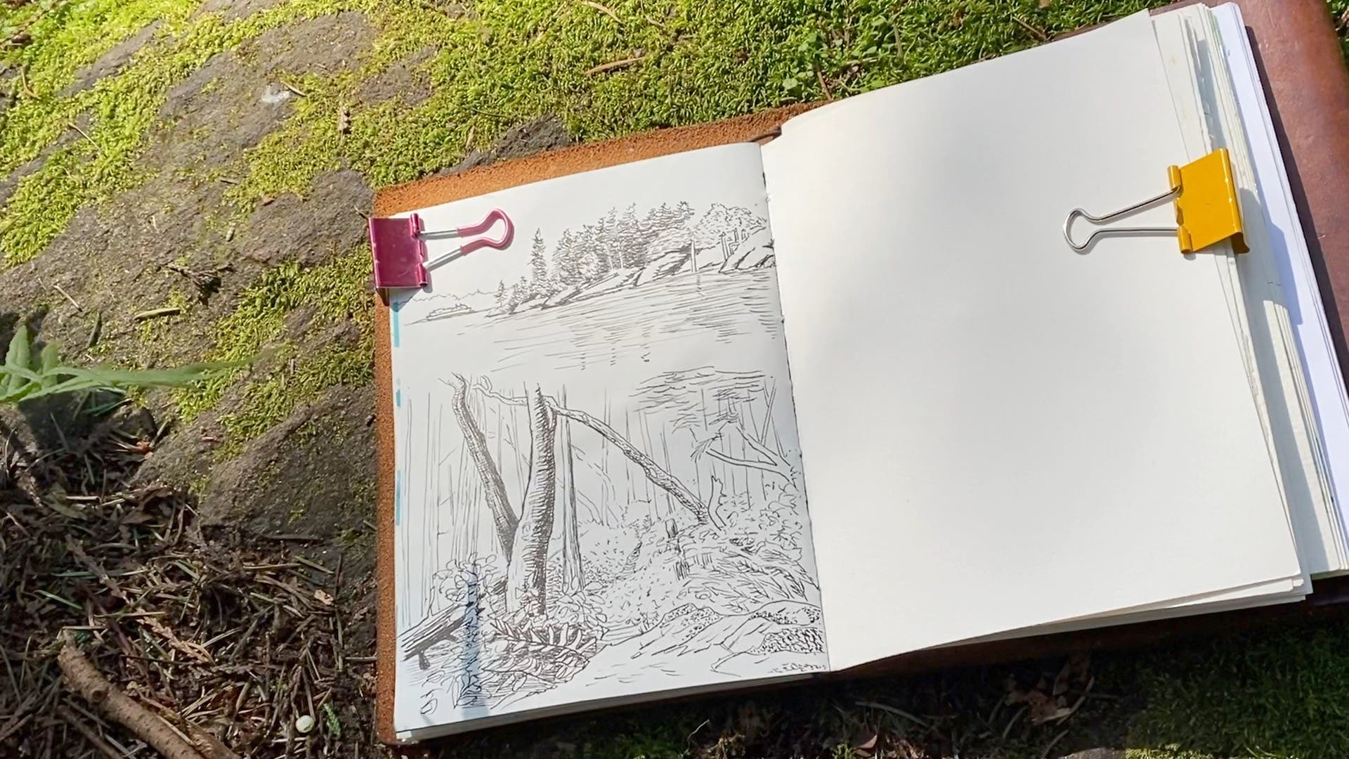 drawing of a forest