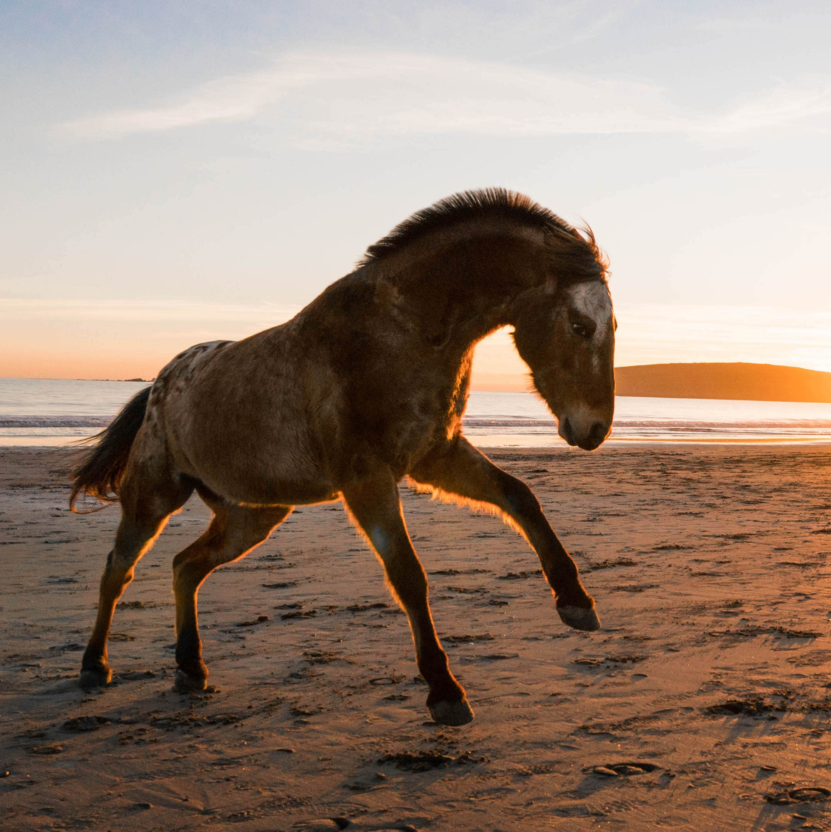 Dancing with Horses - mustang on the beach