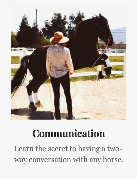 The secret to two-way communication with horses
