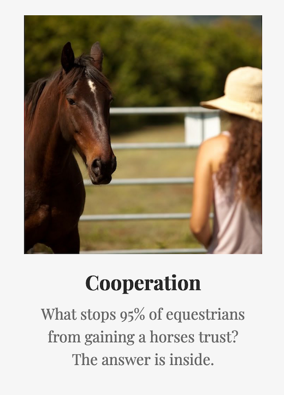 How to get a horse to trust you