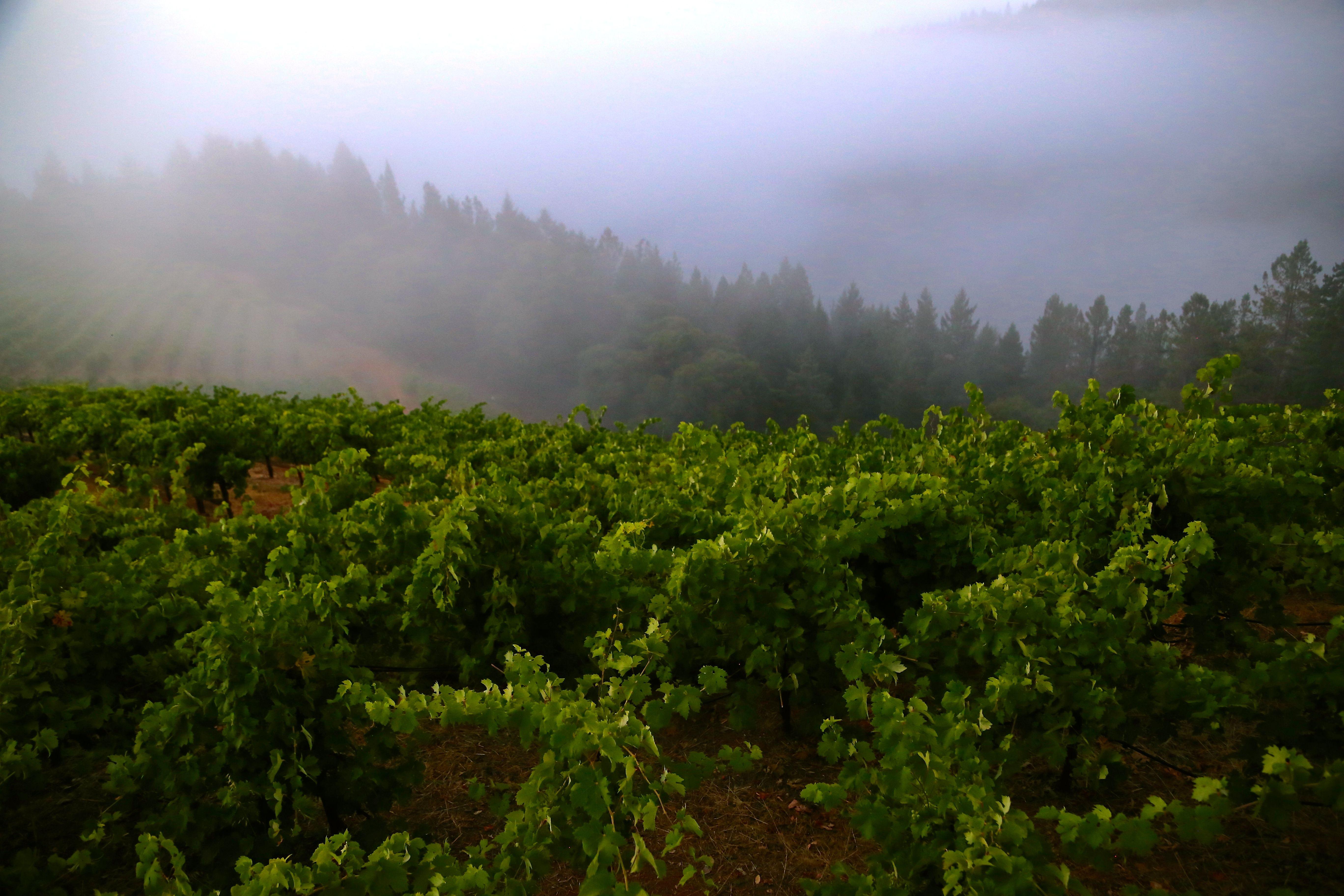 Mendocino Ridge, Mendocino WineGrowers