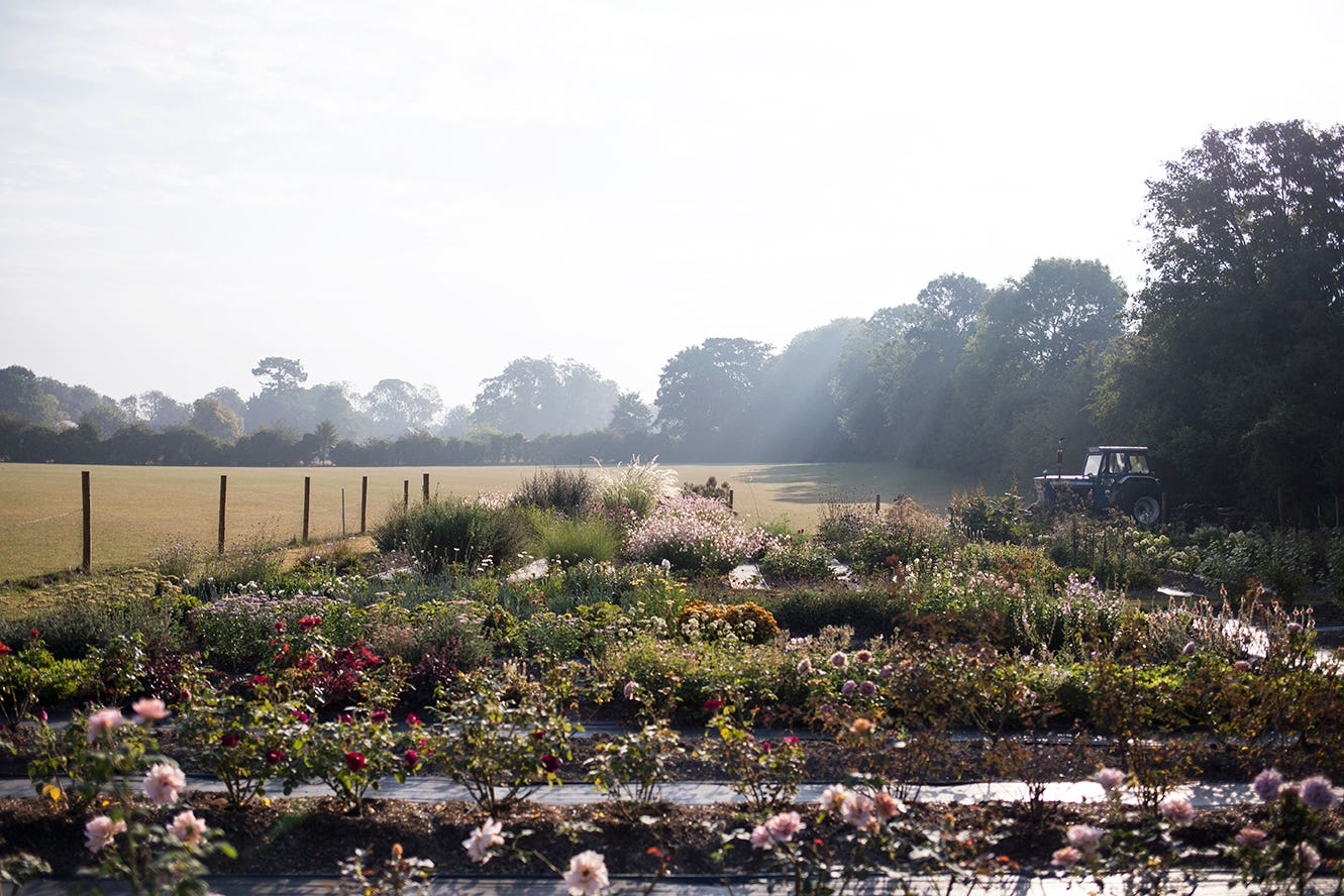 Flower farm Photo Aesme Studio