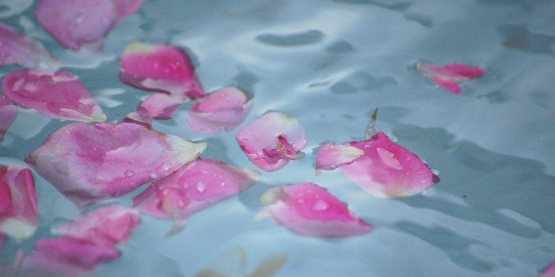 rose flower petals floating in water