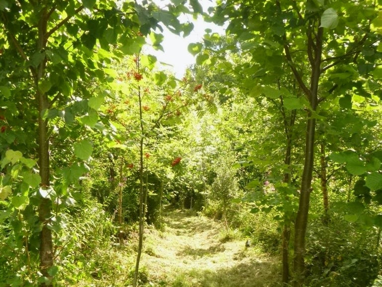 Path throughthe medicianl forest garden