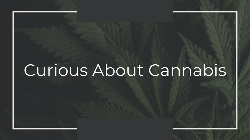 Curious About Cannabis