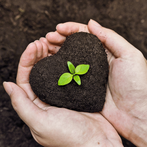 Holding heart-shaped soil with plant sprouting in center
