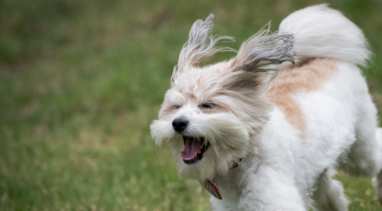 Services For Pet Professionals