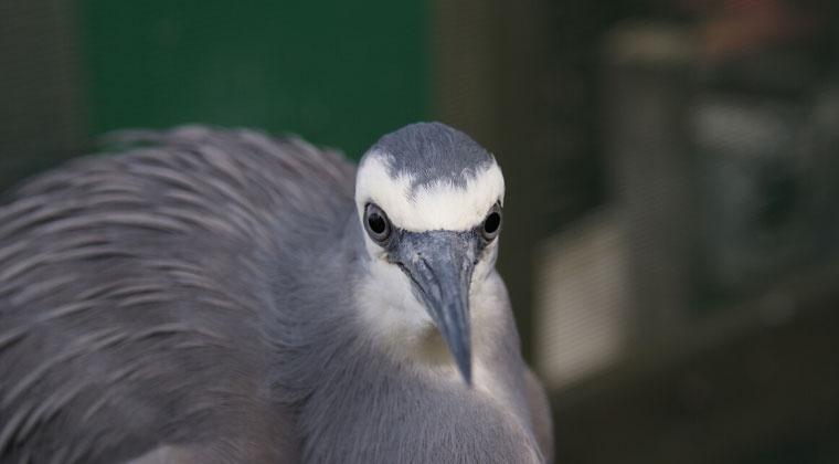 Introduction to Wild Bird Rehabilitation Updated 2020