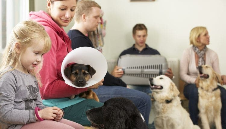 Veterinary Receptionists CPD