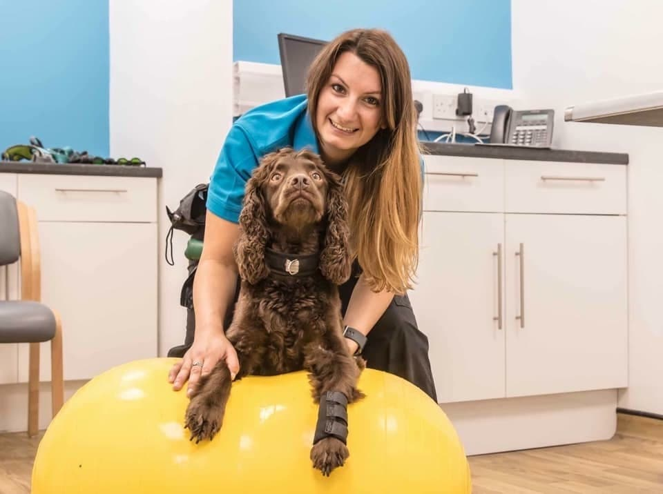 Veterinary Physiotherapy and Rehabilitation CPD