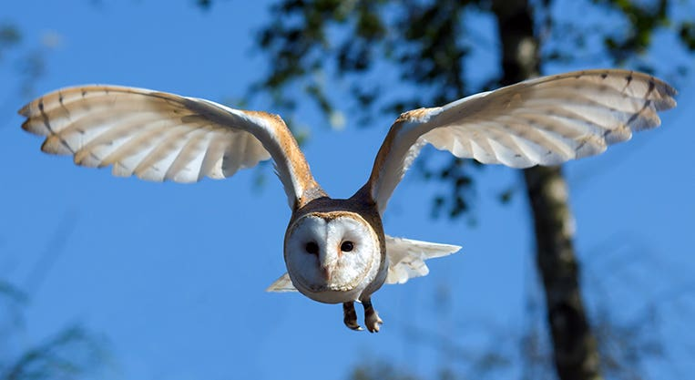 Wise Training Owl podcasts